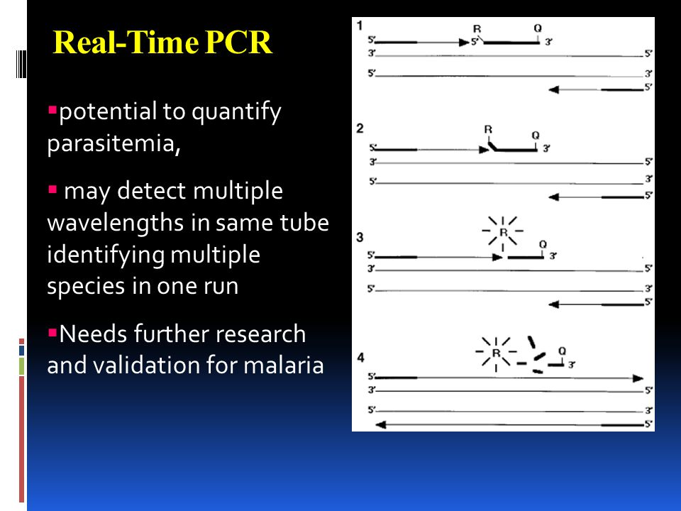 Real-Time PCR potential to quantify parasitemia,