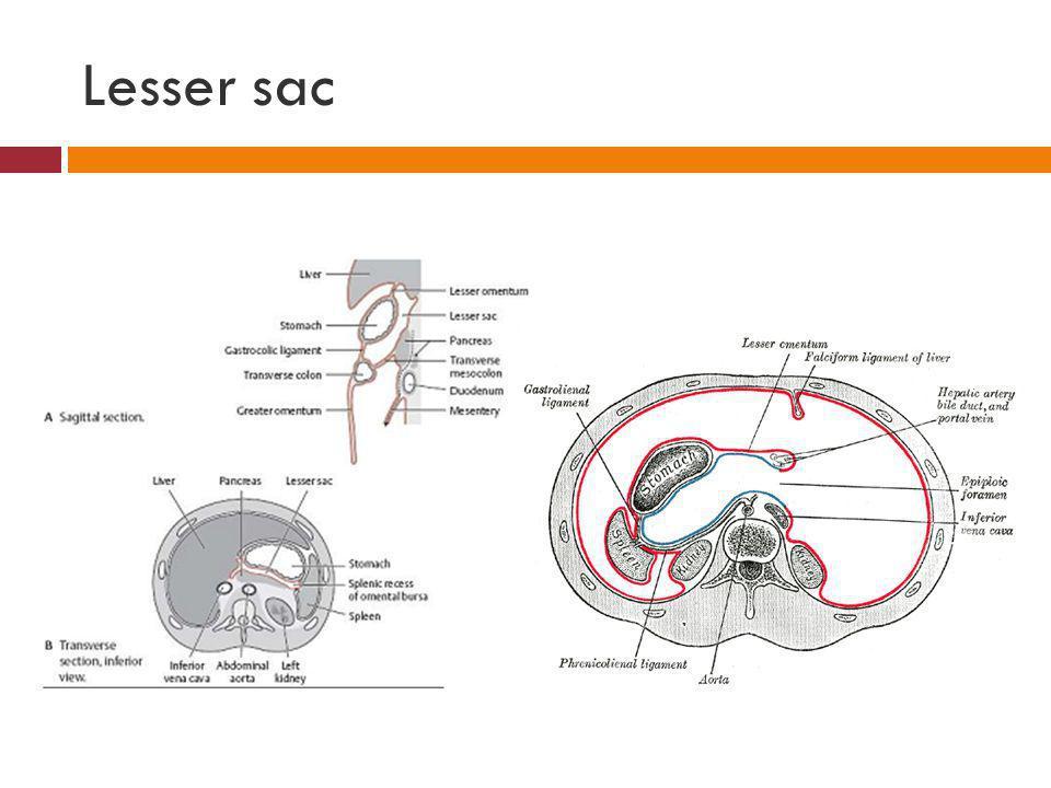 Lesser sac