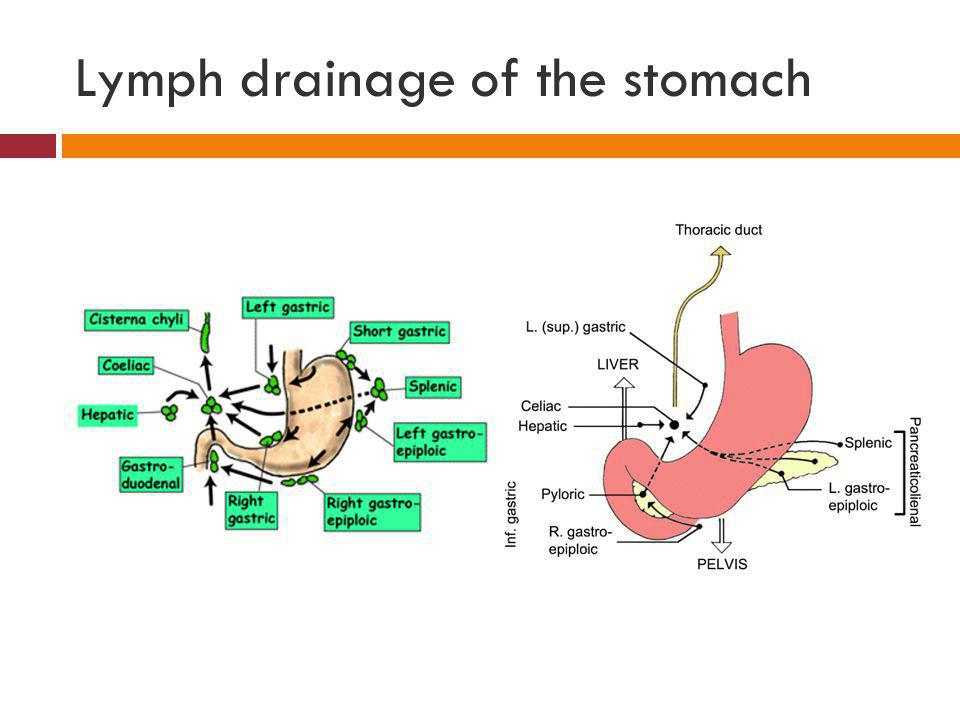 Lymph drainage of the stomach