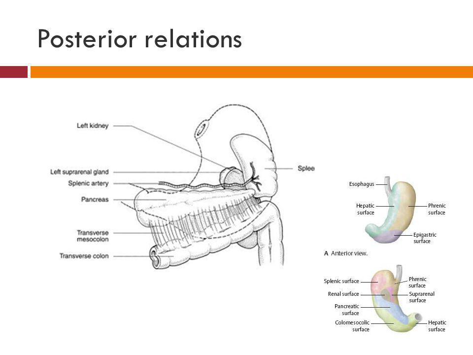 Posterior relations