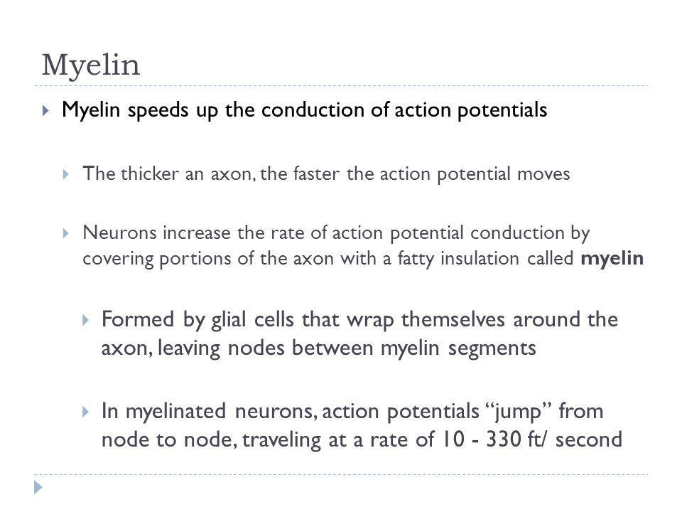 Myelin Myelin speeds up the conduction of action potentials. The thicker an axon, the faster the action potential moves.
