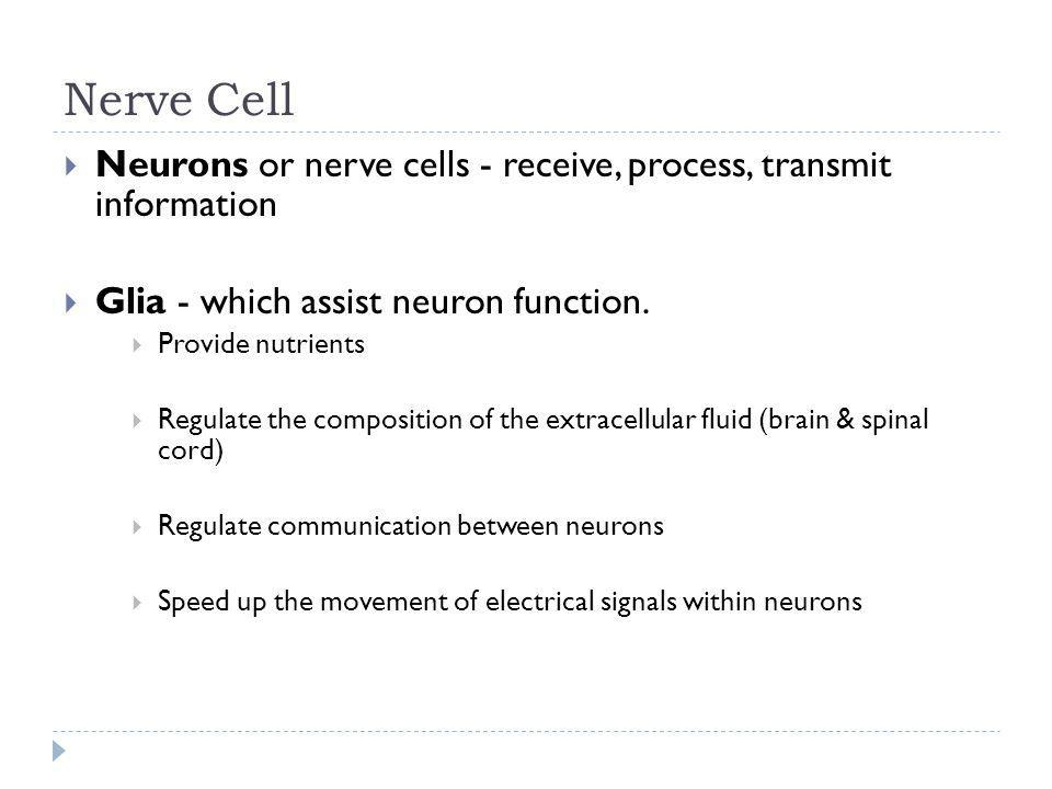 Nerve Cell Neurons or nerve cells - receive, process, transmit information. Glia - which assist neuron function.