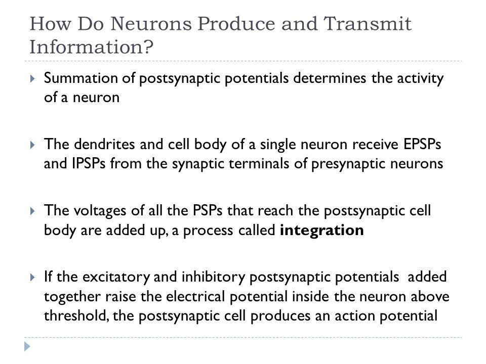 How Do Neurons Produce and Transmit Information