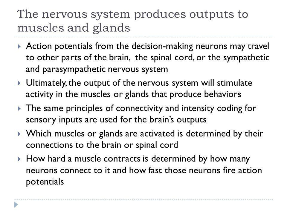 The nervous system produces outputs to muscles and glands