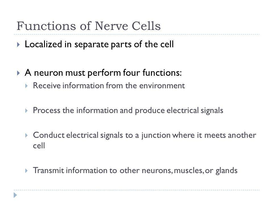 Functions of Nerve Cells