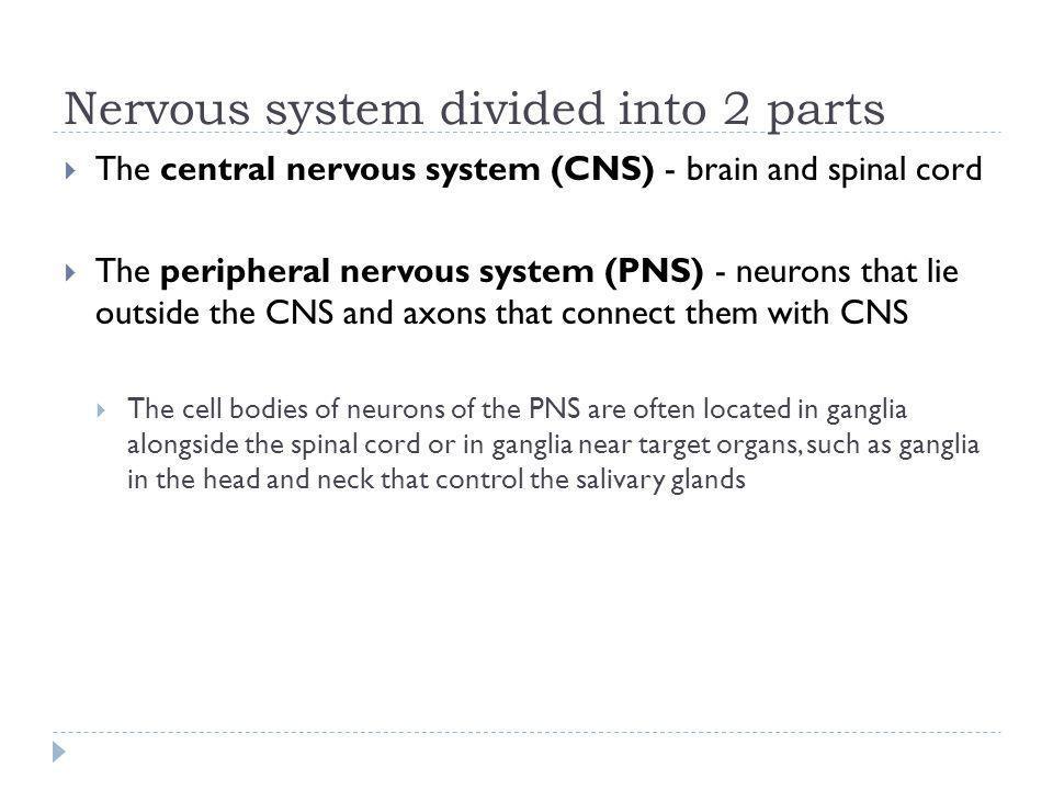 Nervous system divided into 2 parts