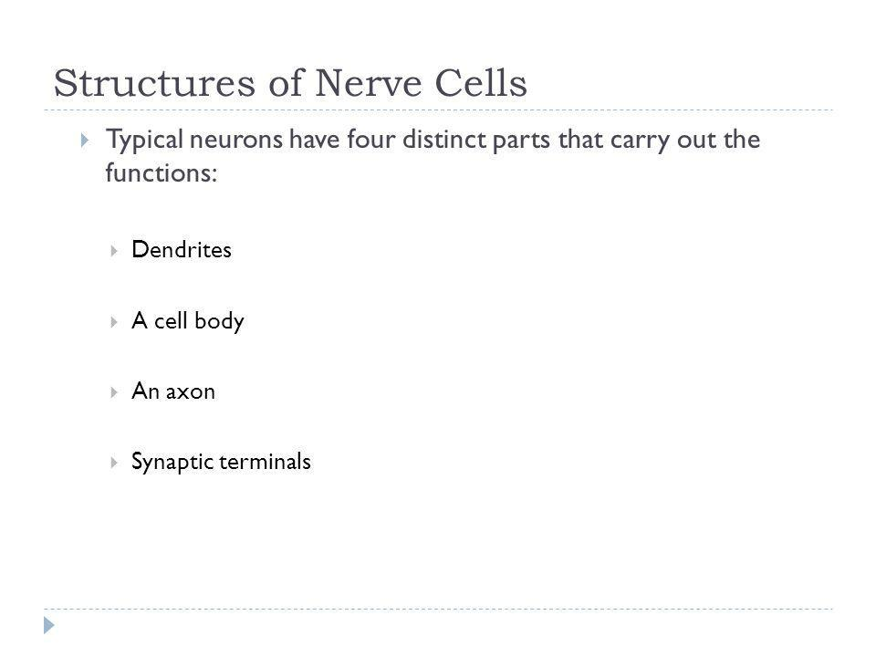 Structures of Nerve Cells