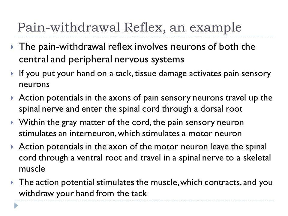 Pain-withdrawal Reflex, an example