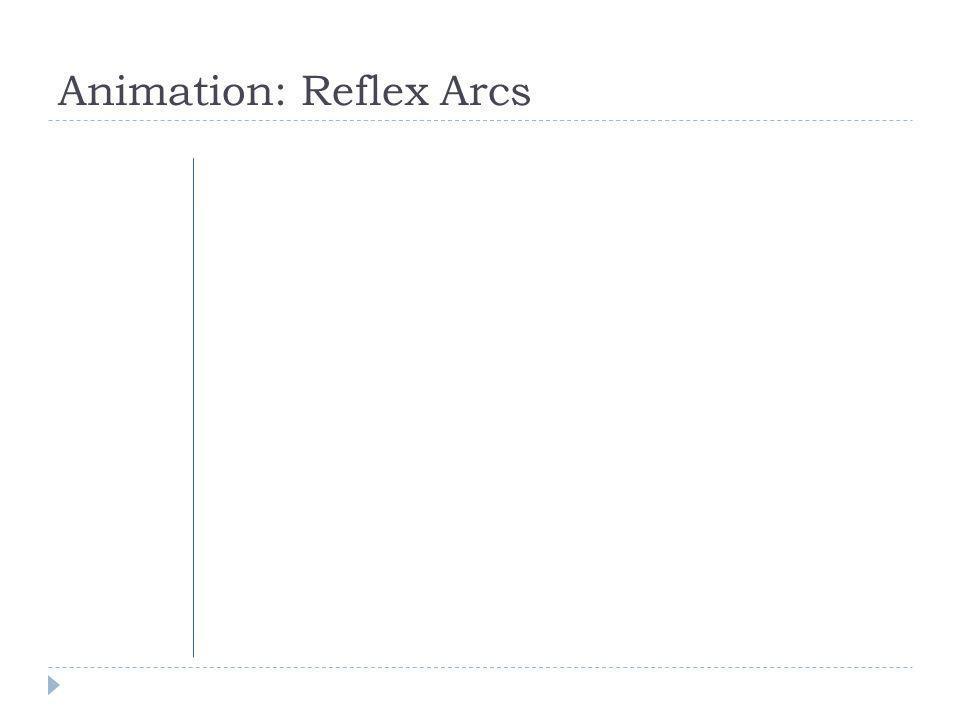 Animation: Reflex Arcs