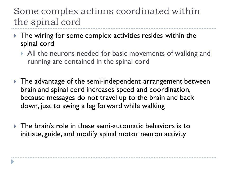 Some complex actions coordinated within the spinal cord