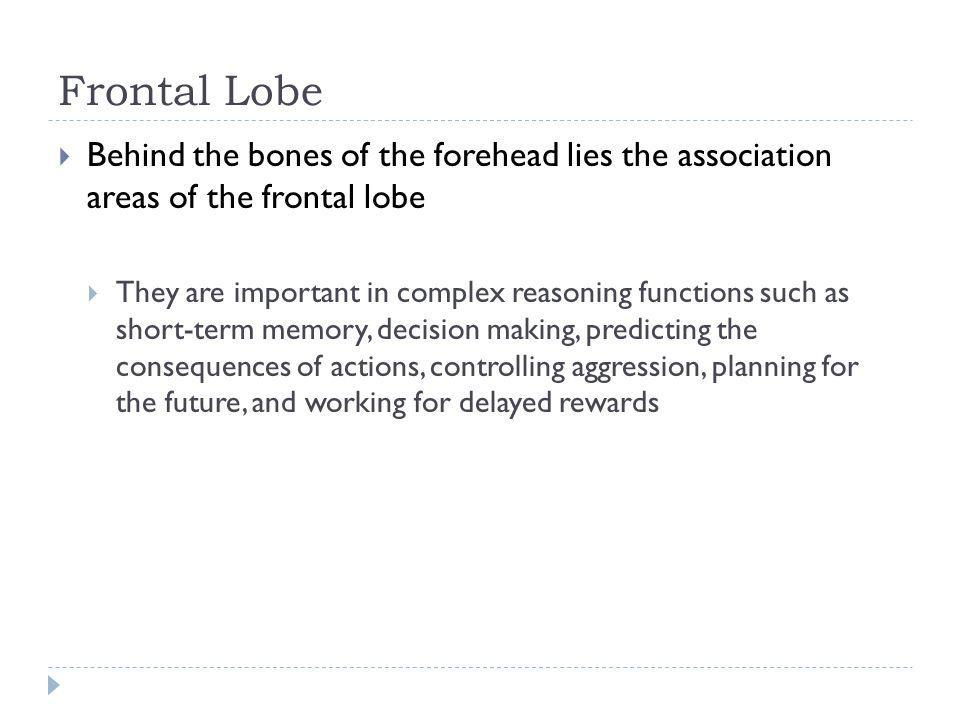 Frontal Lobe Behind the bones of the forehead lies the association areas of the frontal lobe.