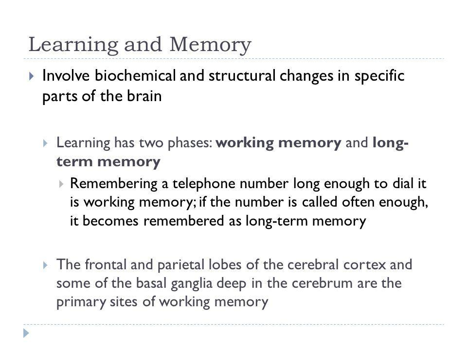 Learning and Memory Involve biochemical and structural changes in specific parts of the brain.