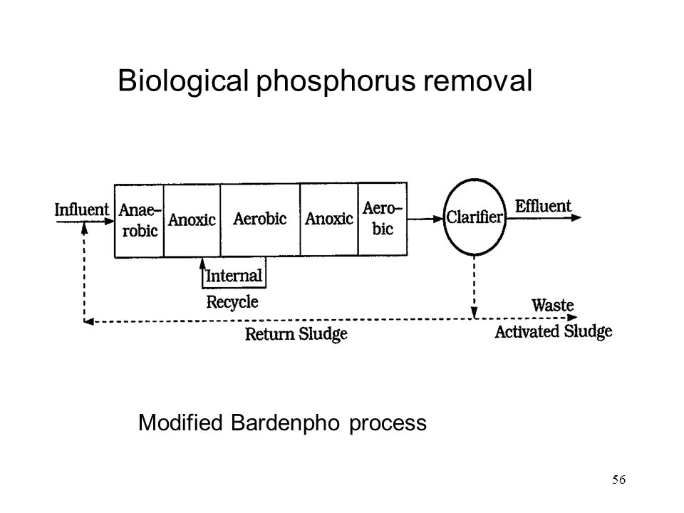 Introduction to Phosphorus Removal Study Guide