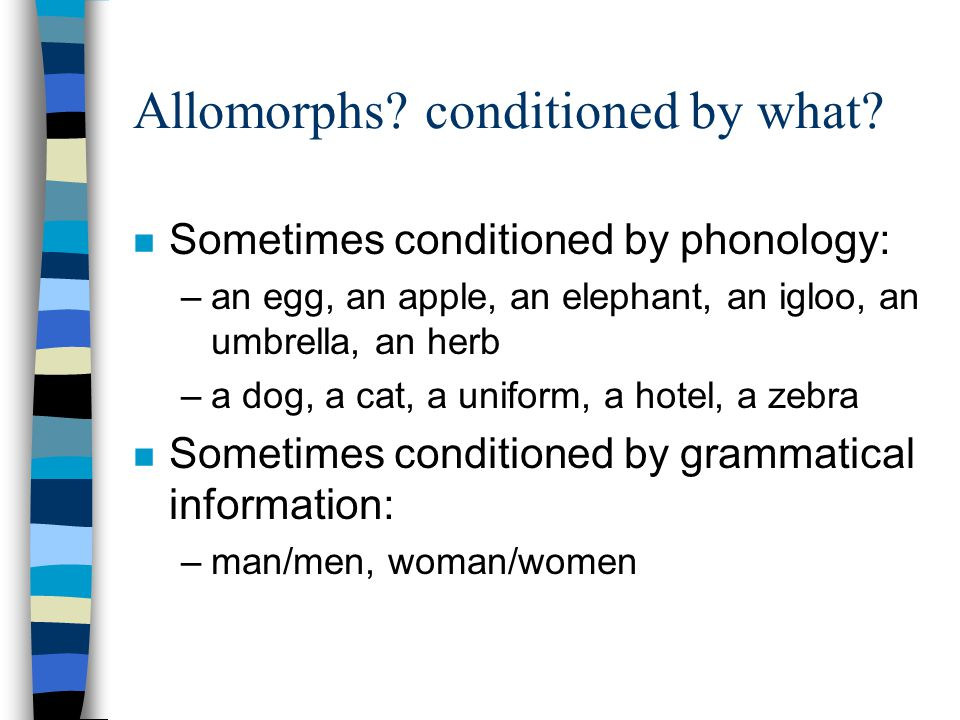 Allomorphs conditioned by what