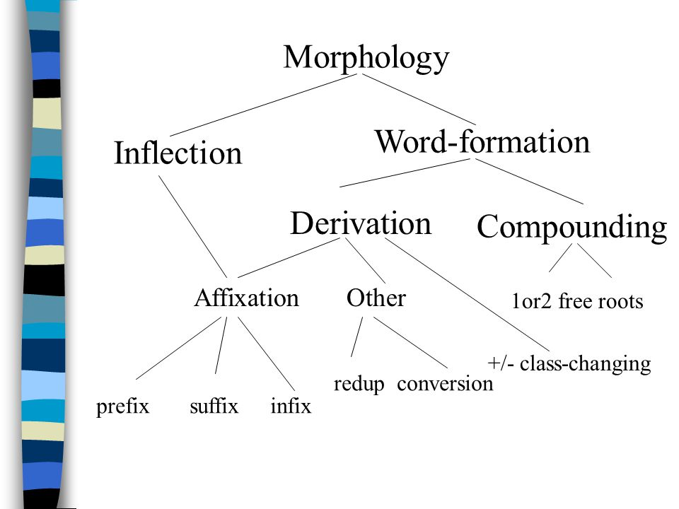 Morphology Word-formation Inflection Derivation Compounding Affixation