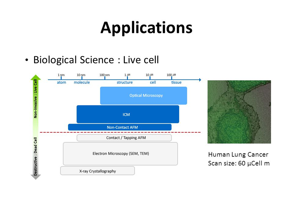Applications Biological Science : Live cell Human Lung Cancer