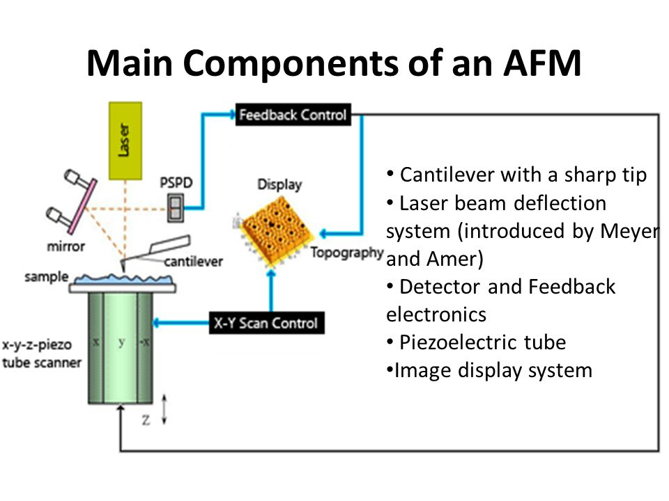 Main Components of an AFM
