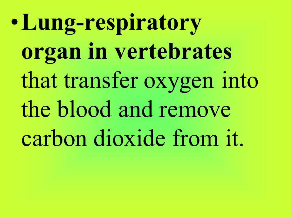 Lung-respiratory organ in vertebrates that transfer oxygen into the blood and remove carbon dioxide from it.