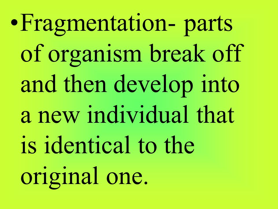 Fragmentation- parts of organism break off and then develop into a new individual that is identical to the original one.