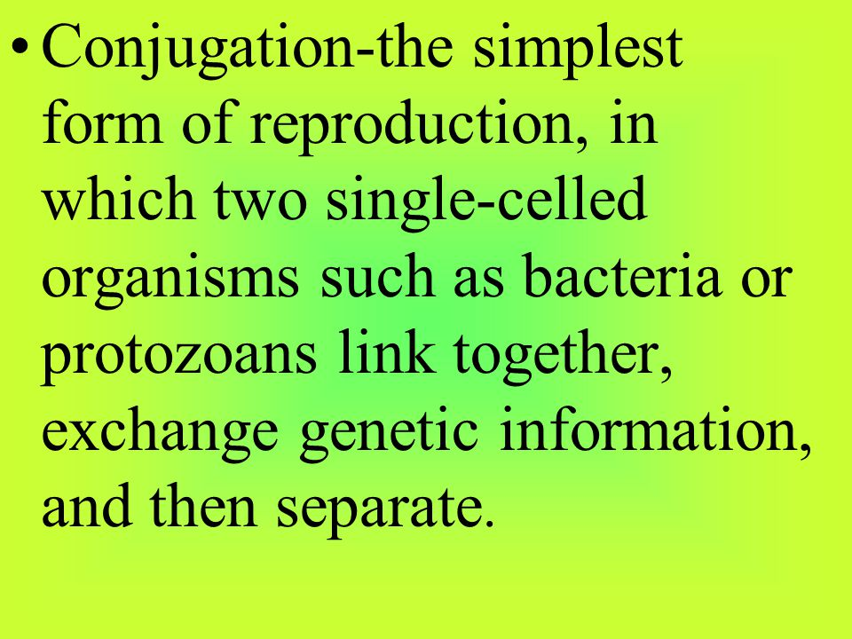 Conjugation-the simplest form of reproduction, in which two single-celled organisms such as bacteria or protozoans link together, exchange genetic information, and then separate.