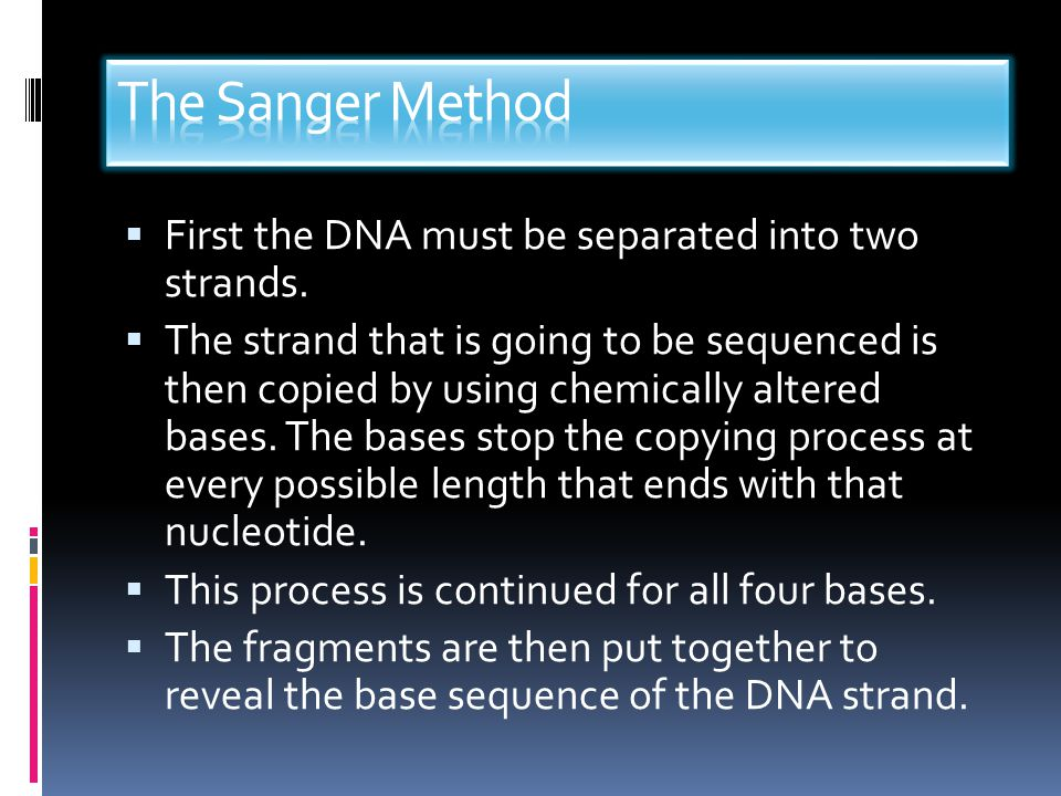 The Sanger Method First the DNA must be separated into two strands.