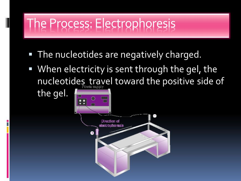 The Process: Electrophoresis