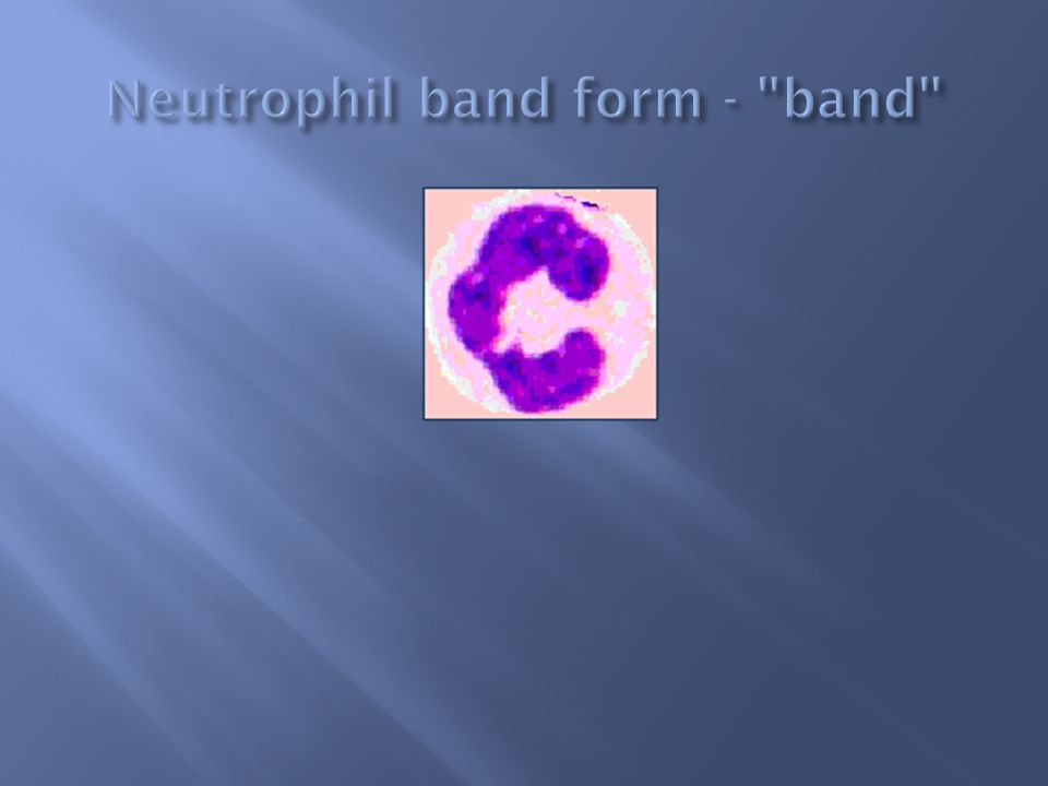 Neutrophil band form - band