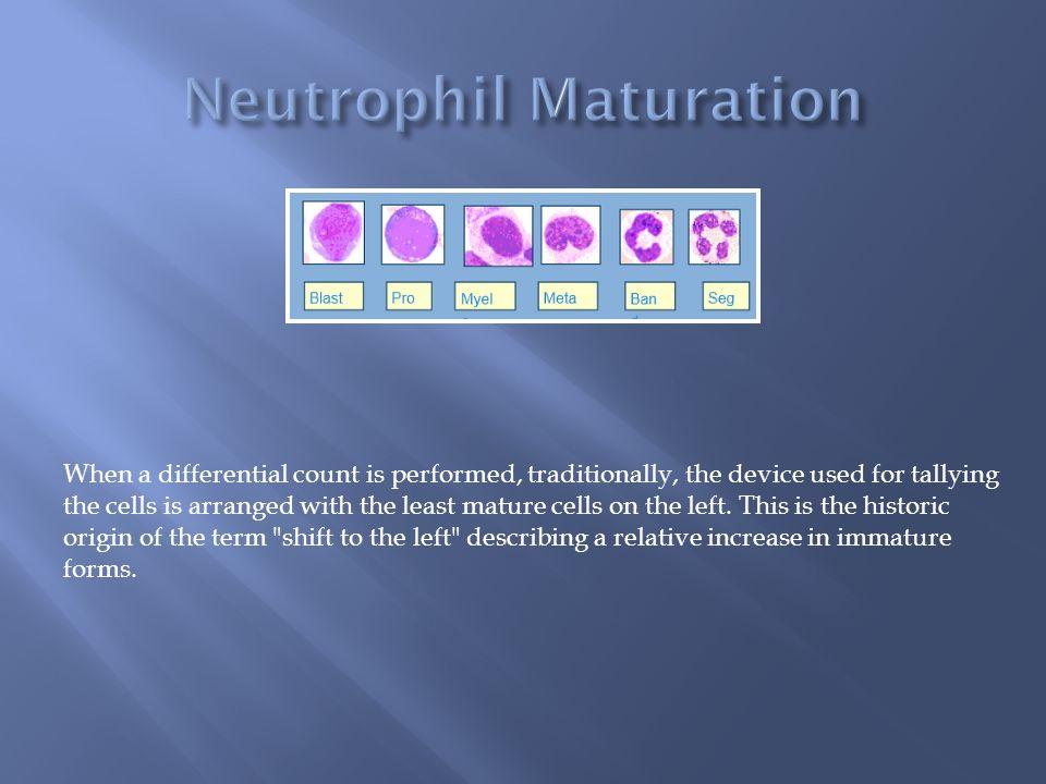 Neutrophil Maturation