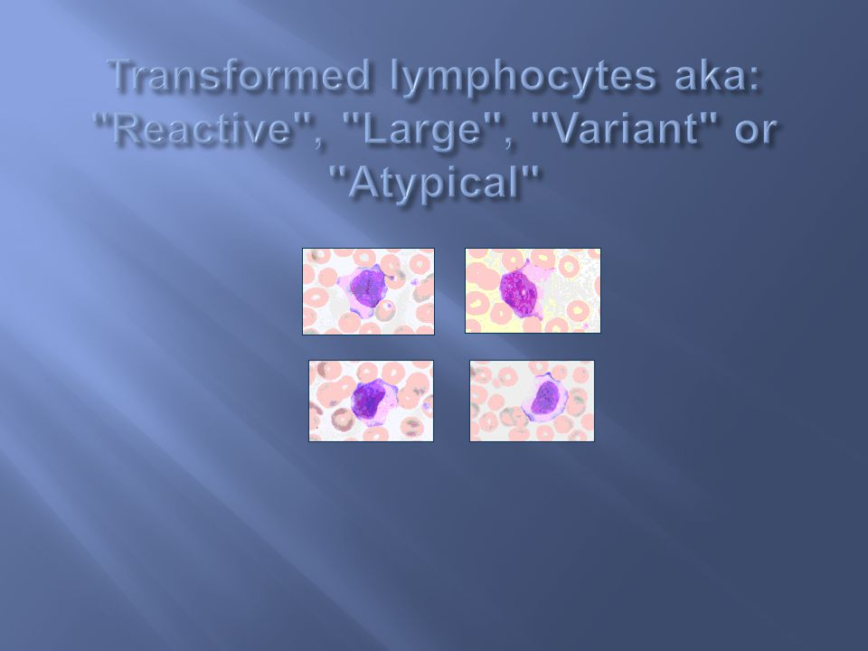 Transformed lymphocytes aka: Reactive , Large , Variant or Atypical
