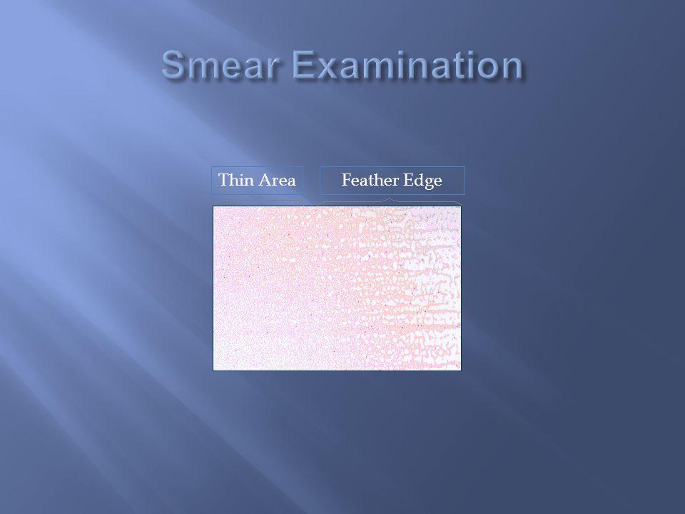 Smear Examination Thin Area Feather Edge