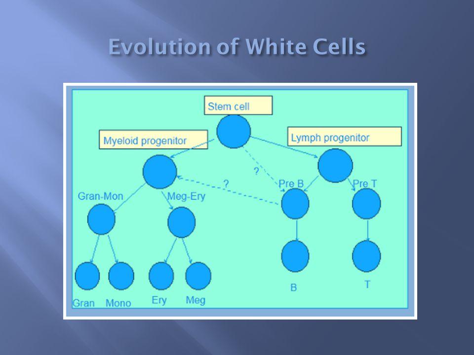 Evolution of White Cells