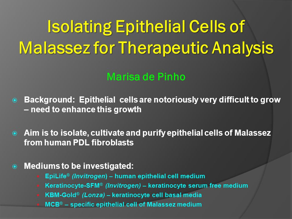 Isolating Epithelial Cells of Malassez for Therapeutic Analysis Marisa de Pinho