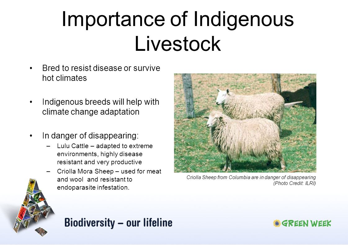 Importance of Indigenous Livestock