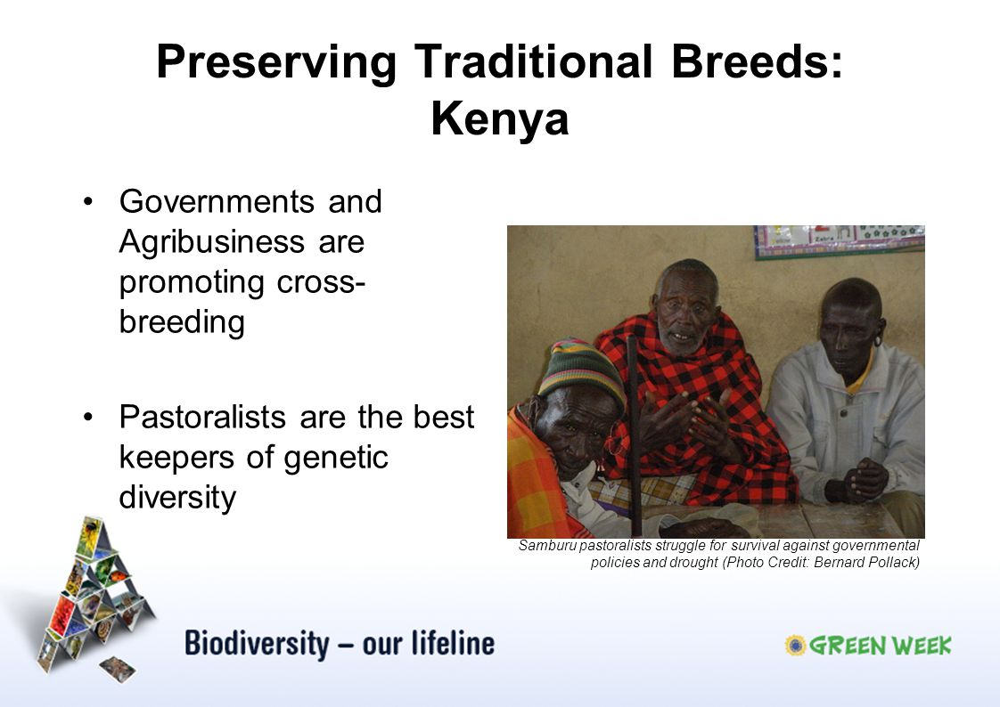 Preserving Traditional Breeds: Kenya