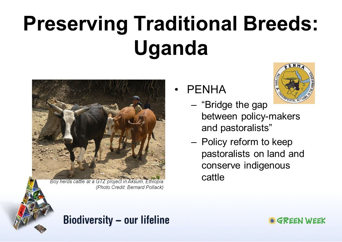Preserving Traditional Breeds: Uganda