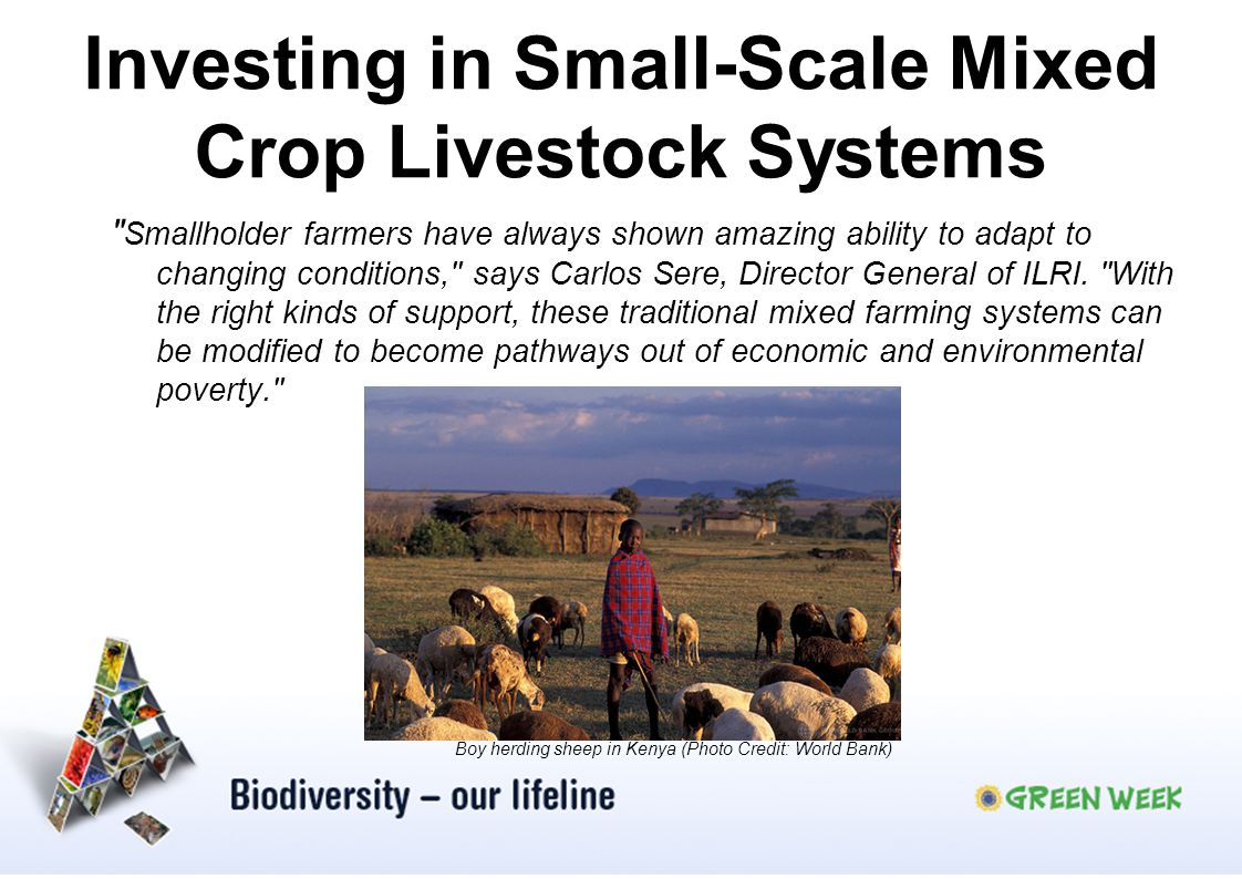 Investing in Small-Scale Mixed Crop Livestock Systems