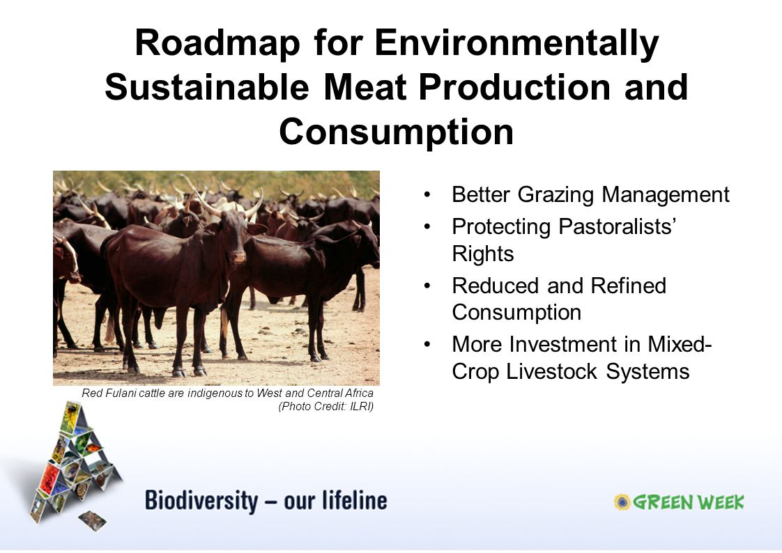 Roadmap for Environmentally Sustainable Meat Production and Consumption