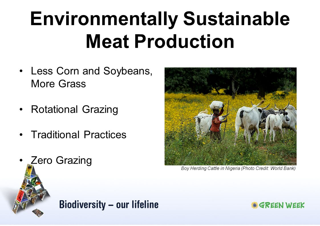 Environmentally Sustainable Meat Production