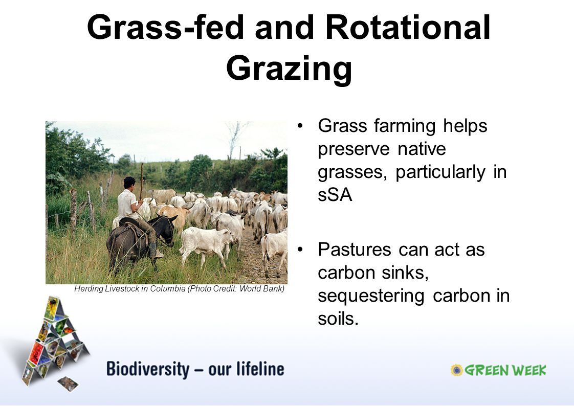Grass-fed and Rotational Grazing