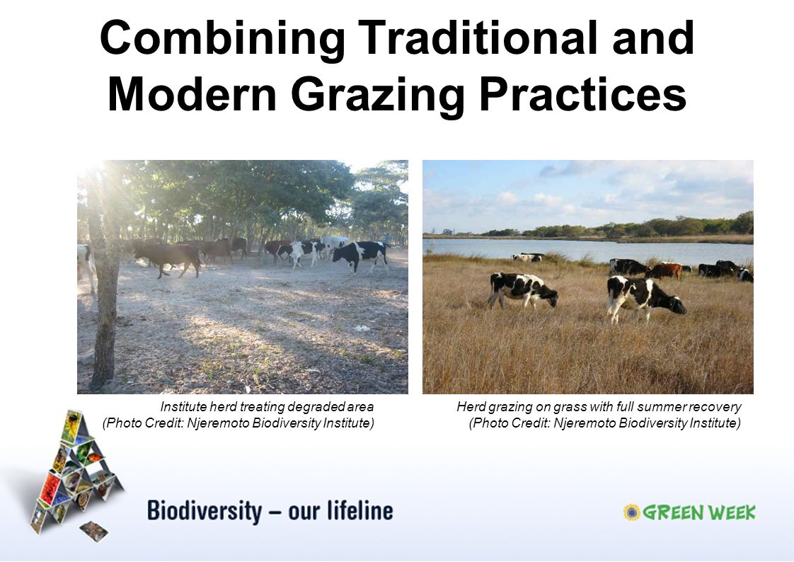 Combining Traditional and Modern Grazing Practices