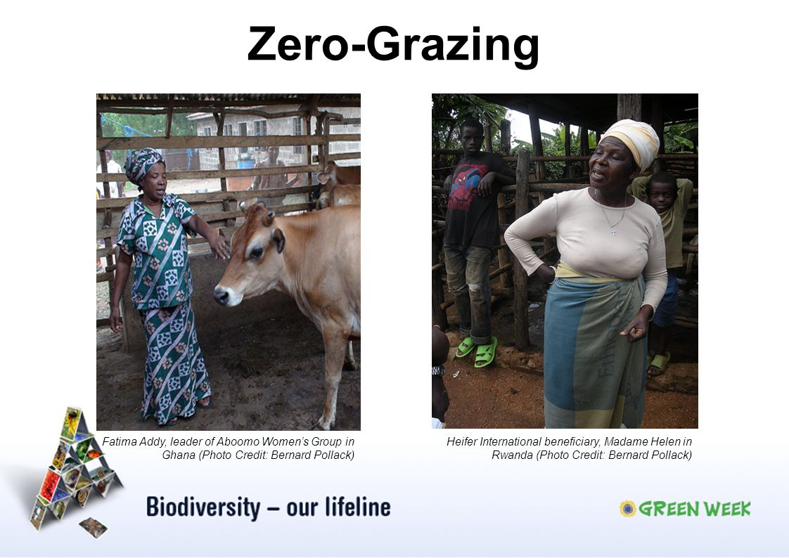 Zero-Grazing Fatima Addy, leader of Aboomo Women's Group in