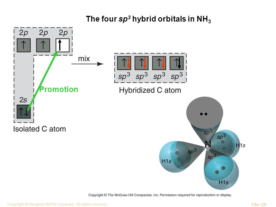 N The four sp3 hybrid orbitals in NH3 Promotion