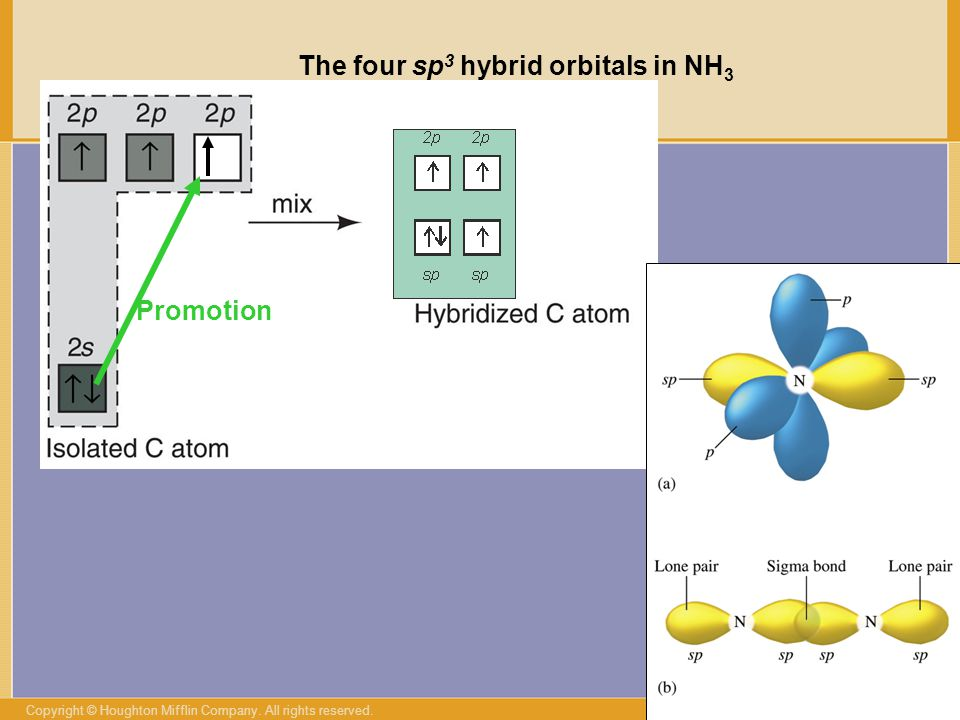 The four sp3 hybrid orbitals in NH3