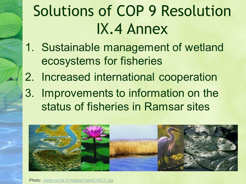 Solutions of COP 9 Resolution IX.4 Annex