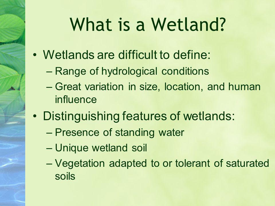 What is a Wetland Wetlands are difficult to define: