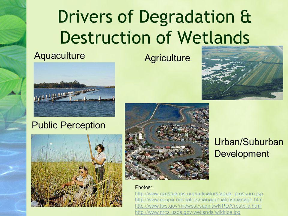 Drivers of Degradation & Destruction of Wetlands