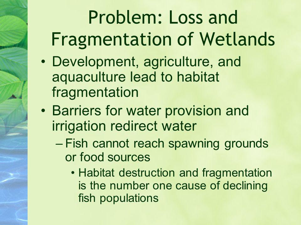 Problem: Loss and Fragmentation of Wetlands