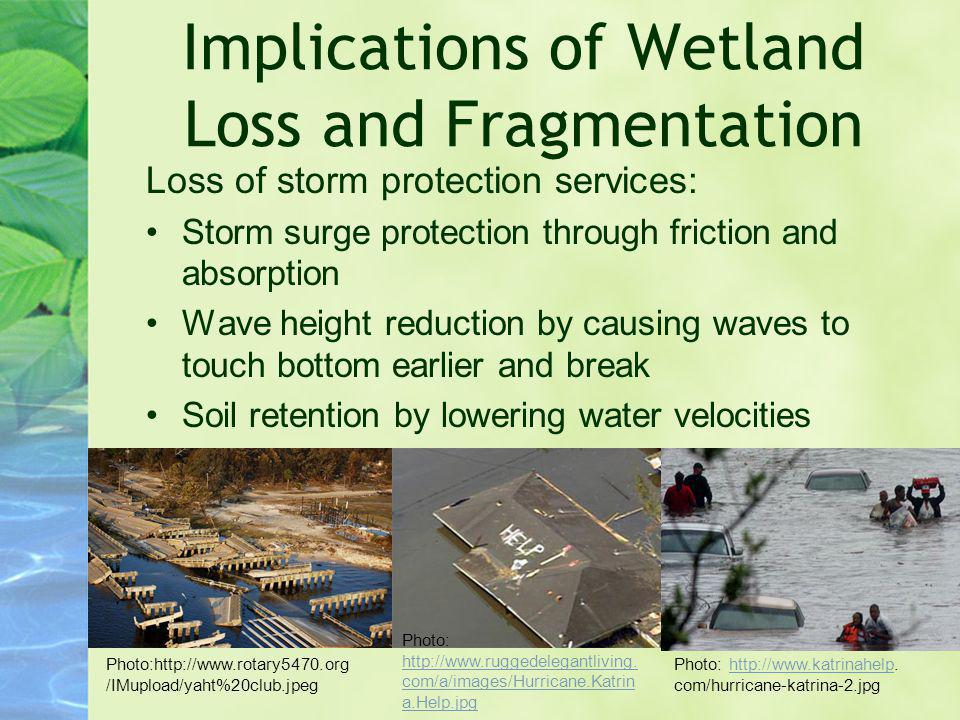 Implications of Wetland Loss and Fragmentation