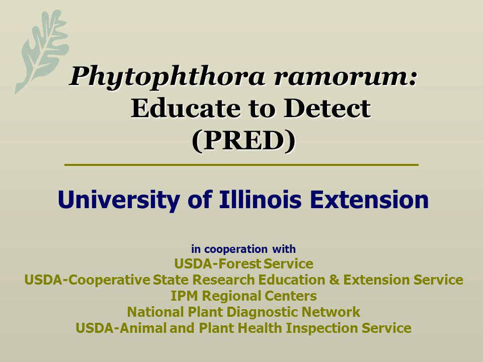 Phytophthora ramorum: Educate to Detect (PRED) University of Illinois Extension in cooperation with USDA-Forest Service USDA-Cooperative State Research Education & Extension Service IPM Regional Centers National Plant Diagnostic Network USDA-Animal and Plant Health Inspection Service