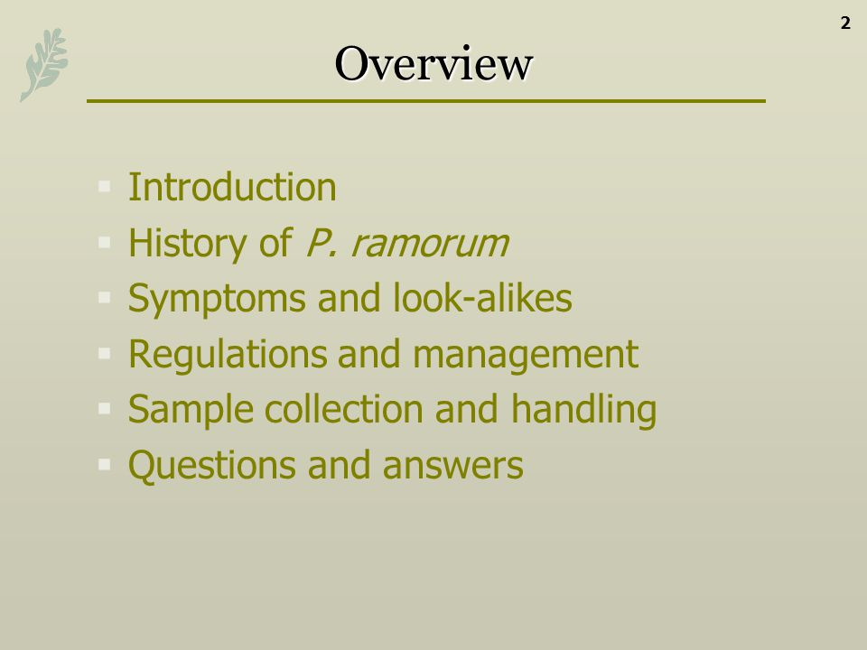 Overview Introduction History of P. ramorum Symptoms and look-alikes